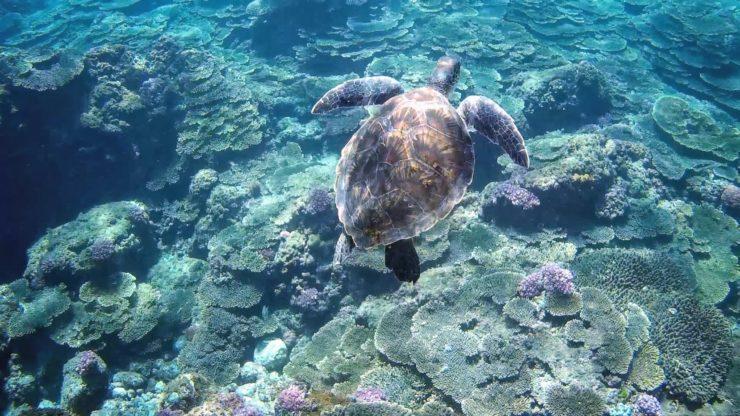 底土海水浴場のウミガメ